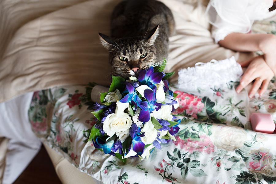 Кот балдеет от свадебного букета невесты