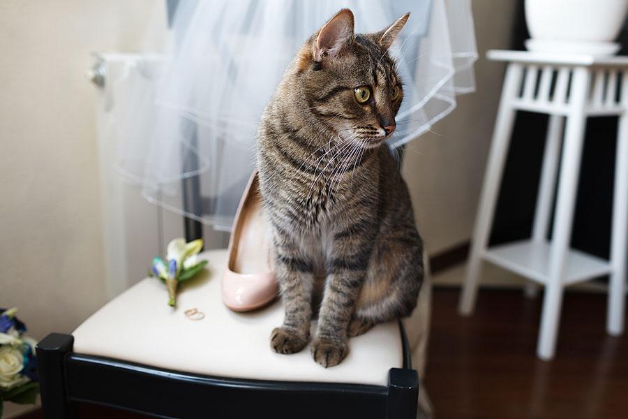 Кот активно участвует в подготовке свадьбы